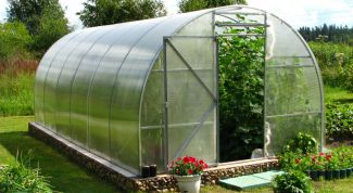 The establishment of greenhouses