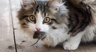 Кошки: правда и ложь