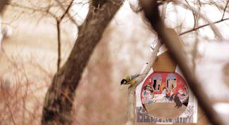 В Москве открылась «Птицерия» – первый «ресторан» для птиц