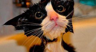 Как помыть кота правильно