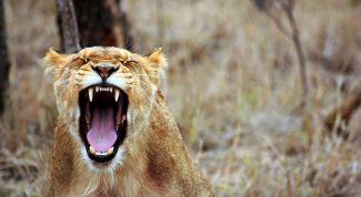 Как справиться с собственным гневом?