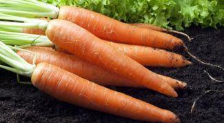 Как посеять морковь: 2 секрета урожайности