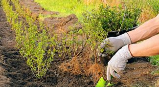 Посадка растений и их очередность