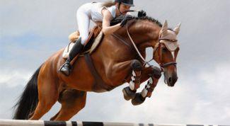 Опасности конного спорта