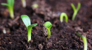 Как обеспечить всхожесть семян