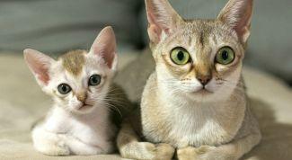 Как избавиться от запаха кошачьей мочи при помощи уксуса