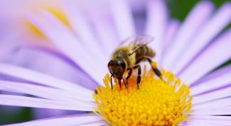 What to do when a bee sting or wasp