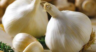 Бизнес-идея: выращивание чеснока
