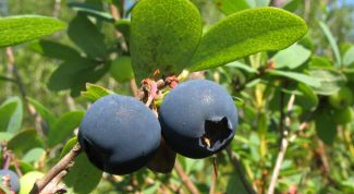 How useful blueberries?