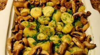 Young potatoes with mushrooms in the oven