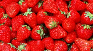How to care for strawberries in the summer to harvest