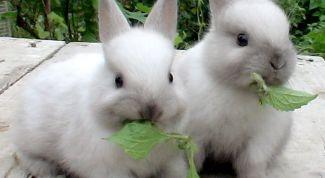 Тонкости и нюансы при выборе кролика