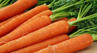 Все о моркови