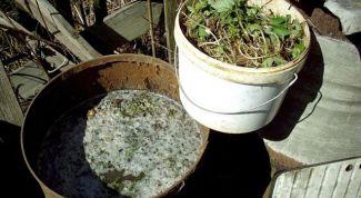 Изготовление и использование настоя из одуванчиков в качестве удобрения