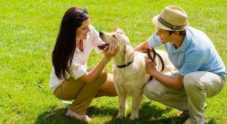 Как защитить домашних животных от клещей