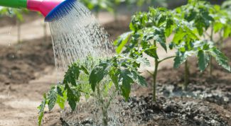 The secrets of proper watering