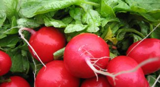 Why radishes goes to tops