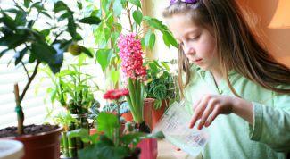 Как с ребенком обустроить огород на подоконнике