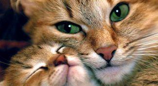 Особенности характера и психологии кошек