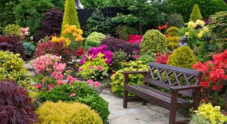 Some helpful tips for beginners in landscape design