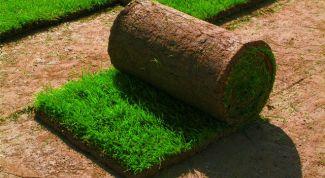Рулонный газон – путь к идеальной лужайке