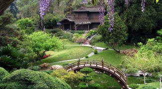 Маленькая Япония: сад в японском стиле