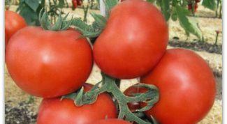 Universal varieties of tomatoes