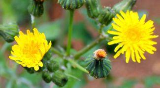 Методы борьбы с устойчивыми сорняками