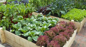 Что нужно успеть сделать в огороде в конце июля