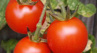 Как нужно пасынковать помидоры