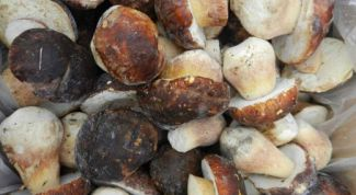 Как правильно заморозить грибы: 3 лучших способа
