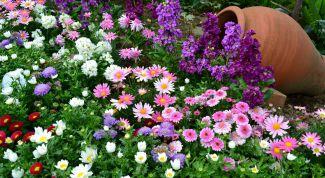 Что делать цветоводу в августе