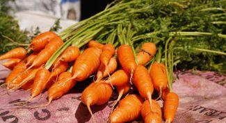 Как обрезать ботву у моркови для хранения
