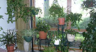Растениеводство для ленивых – самые неприхотливые представители домашней флоры