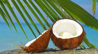 Как получить самим кокосовое молоко