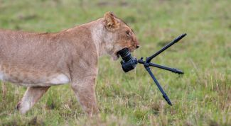 Как выбрать фотоаппарат для снимков
