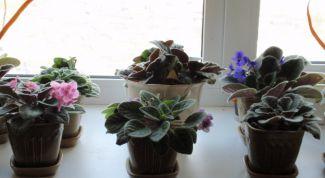 Полезные цветы для здоровья человека