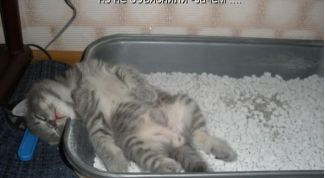Как приучить кошку ходить в лоток