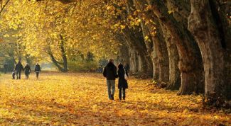 30 дел, которые надо успеть сделать осенью