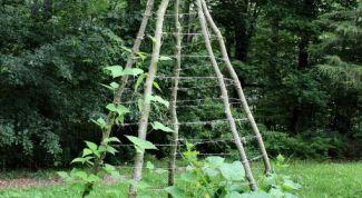 Как сажать огурцы в шалаш и выращивать рассаду в «улитке»