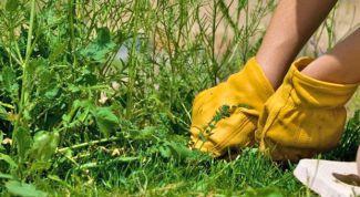 Как осенью бороться с сорняками