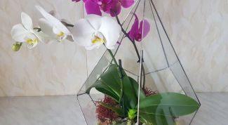 Как высадить орхидею в стеклянный флорариум