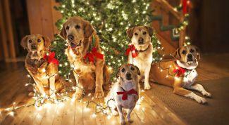 Как встречать Новый 2018 год Желтой Собаки: советы астрологов