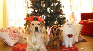 Каким будет 2018 год Желтой Земляной Собаки