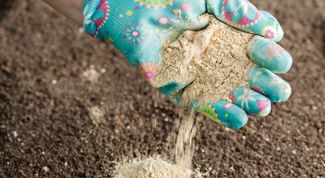 Зачем надо известковать почву в теплице