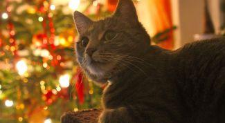 Как украсить елку, если в доме кошка