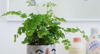 Самые безопасные растения для детской комнаты