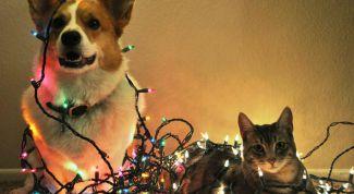 Как защитить питомца на Новый год