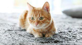 Как избавиться от запаха кошачьей мочи народными средствами