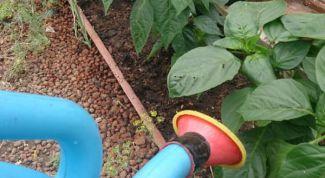 Как увеличить урожай при правильном поливе